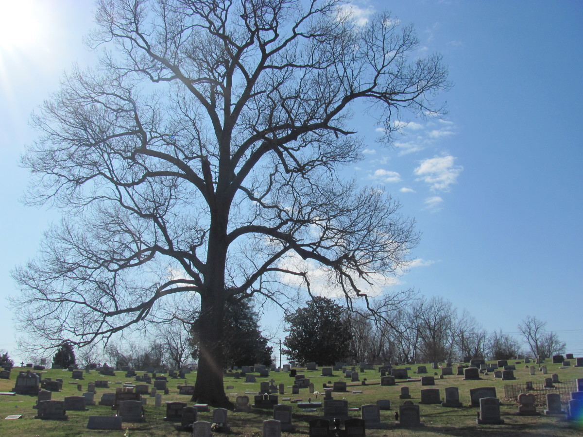 This beautiful old tree is a place to reflect in the company of relatives long gone