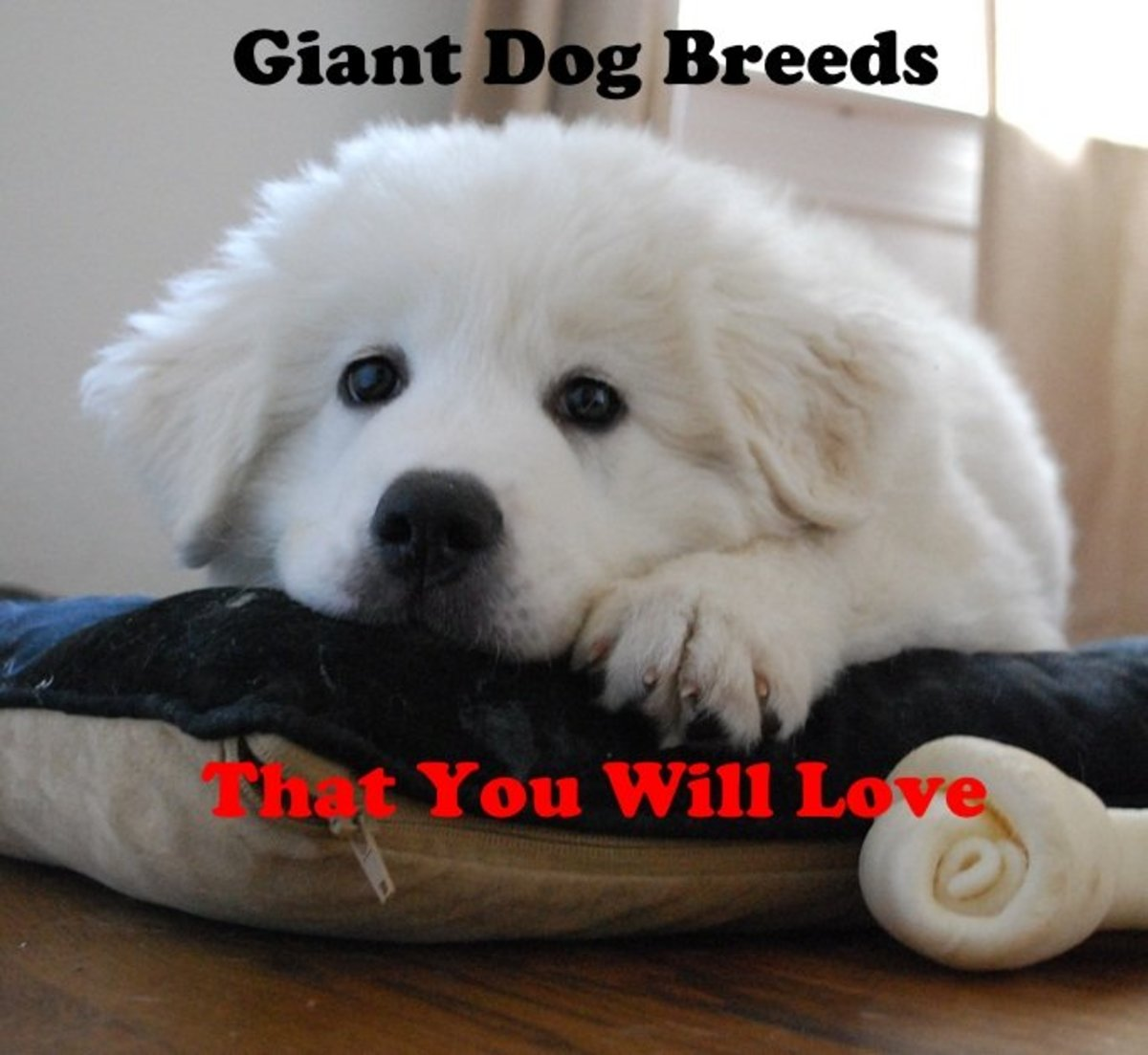 Giant dog breeds you will love.