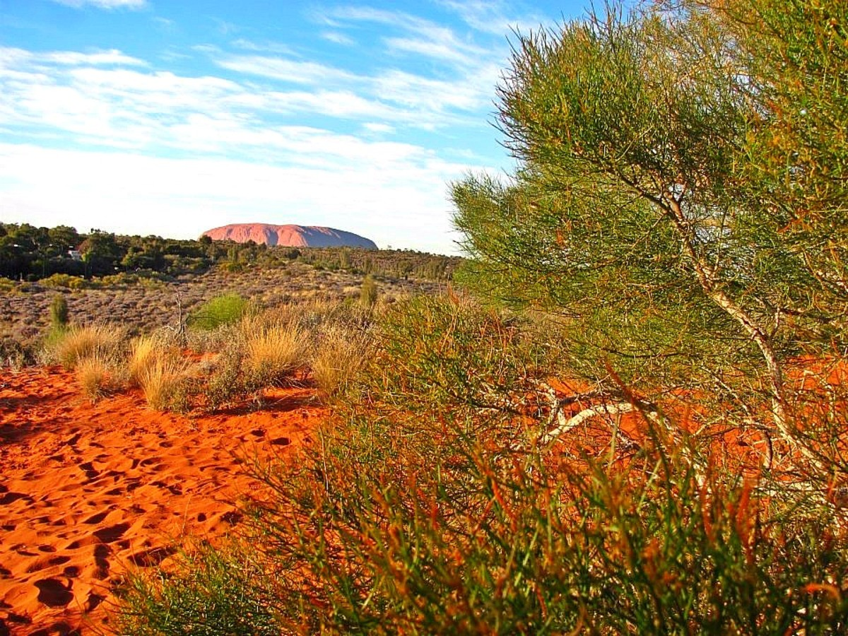 What to Do in the Australian Outback
