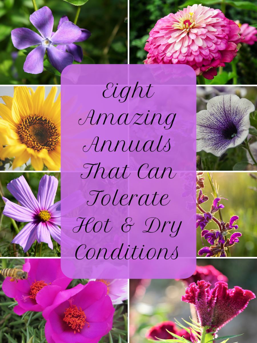 8 Awesome Heat and Drought-Tolerant Annual Flowers and Plants