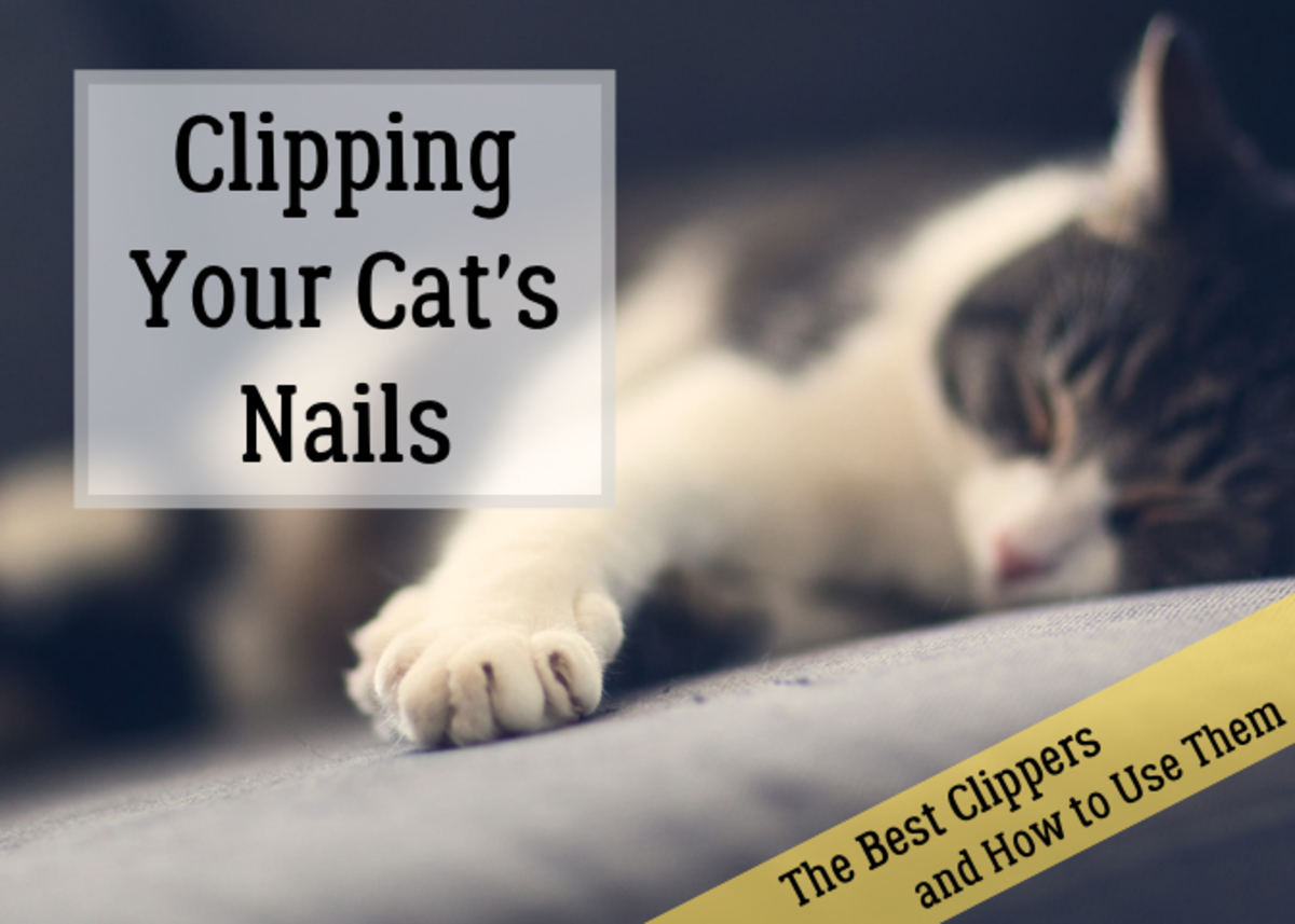 Review the types of clippers and which ones work best. Get tips on trimming your cat's claws.