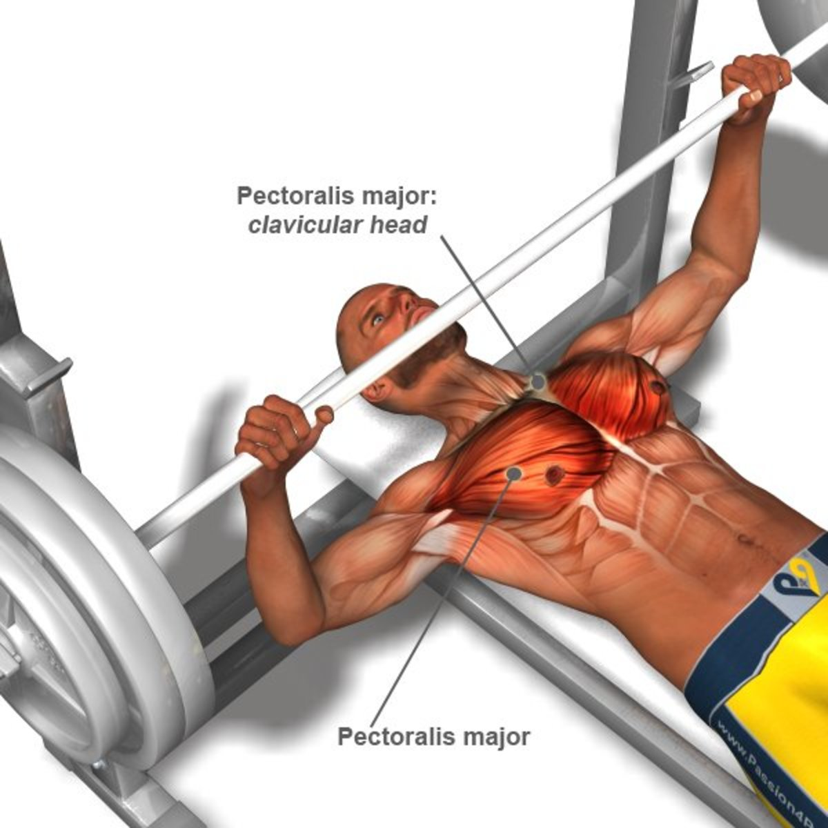 developing-your-chest