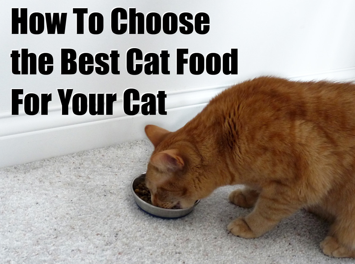 Feeding your cat high-quality food can help him live a long, healthy life.