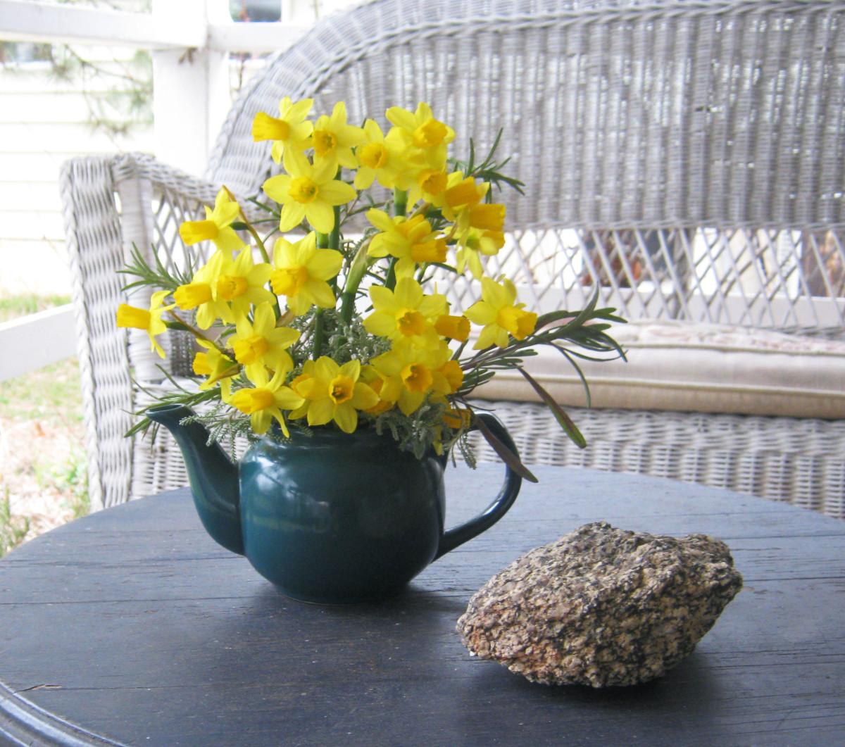 Dwarf daffodils in a small tea pot.