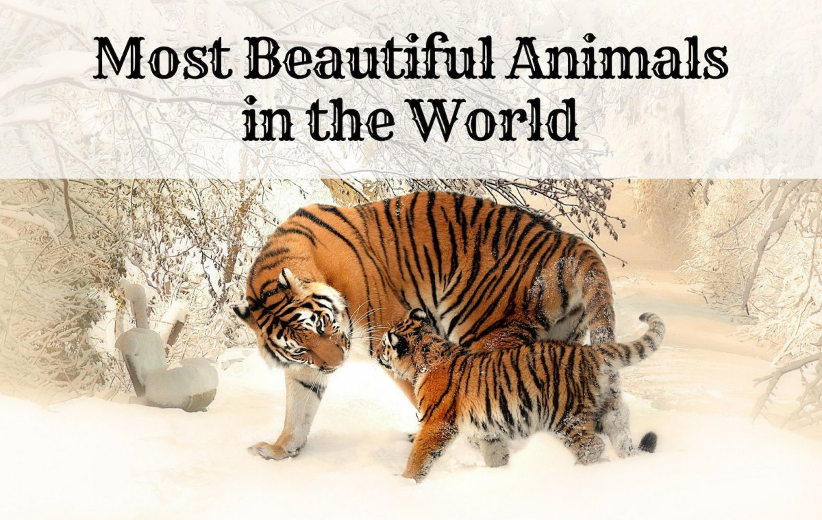 The 10 Most Beautiful and Majestic Animals in the World