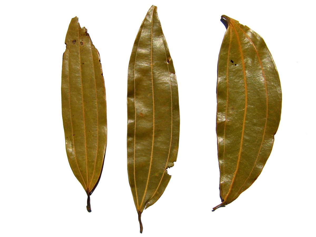 Indian Bay Leaf Or Tejpatta