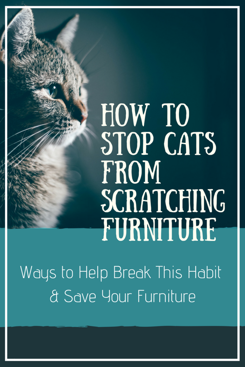 Learn how to stop cats from scratching furniture.