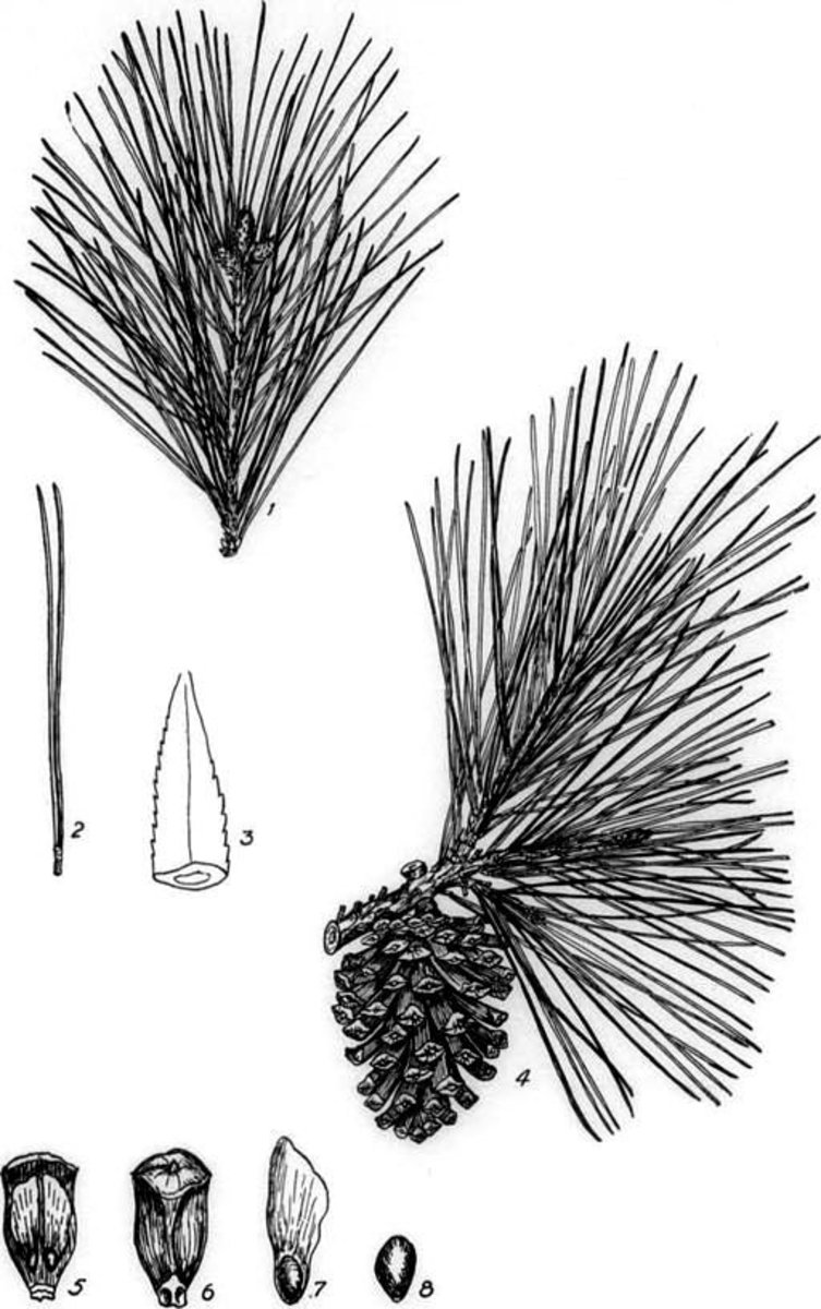 Length of needles is an important consideration when selecting needles to use for basket making.