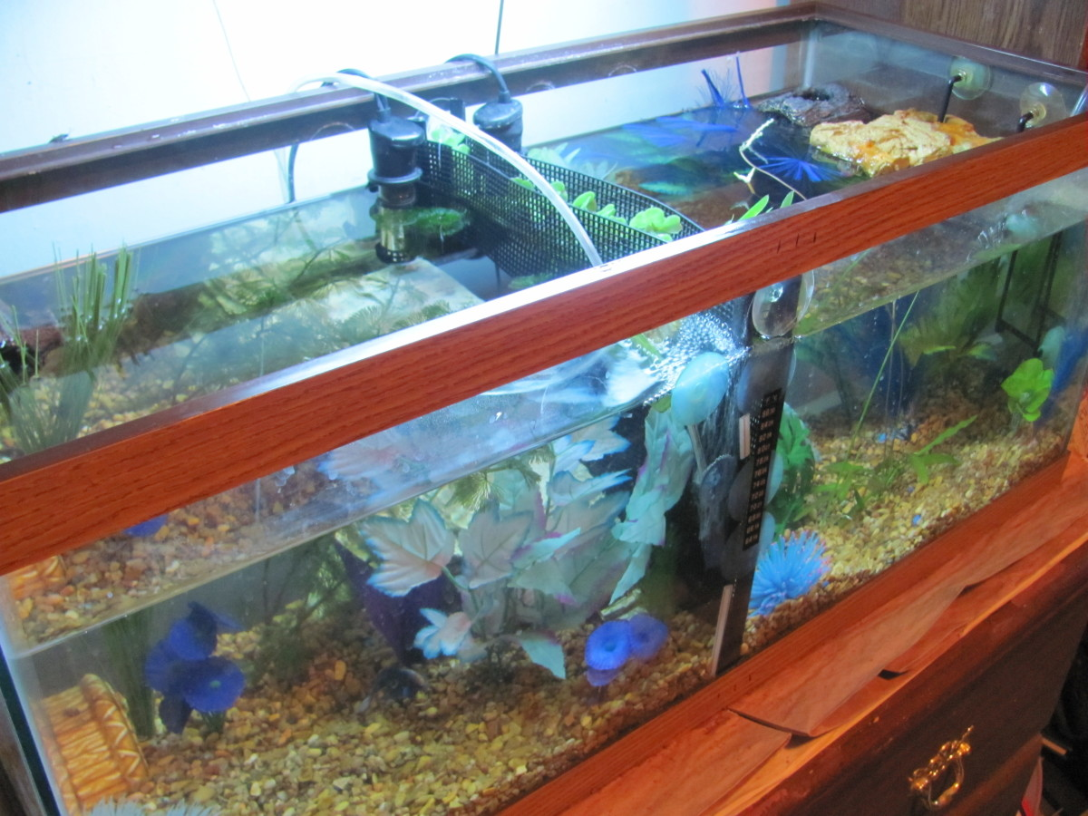 How to make a cheap home made betta tank divider pethelpful for Fish tank divider