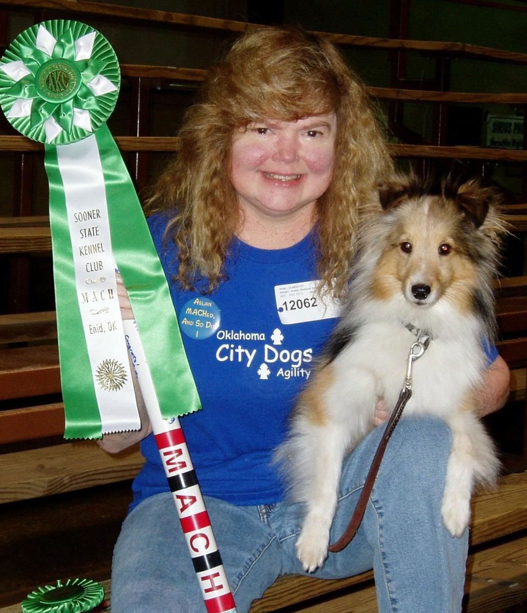 The author and her sheltie, Aslan, with his first MACH (Master Agility Championship) ribbon and MACH bar in 2006.