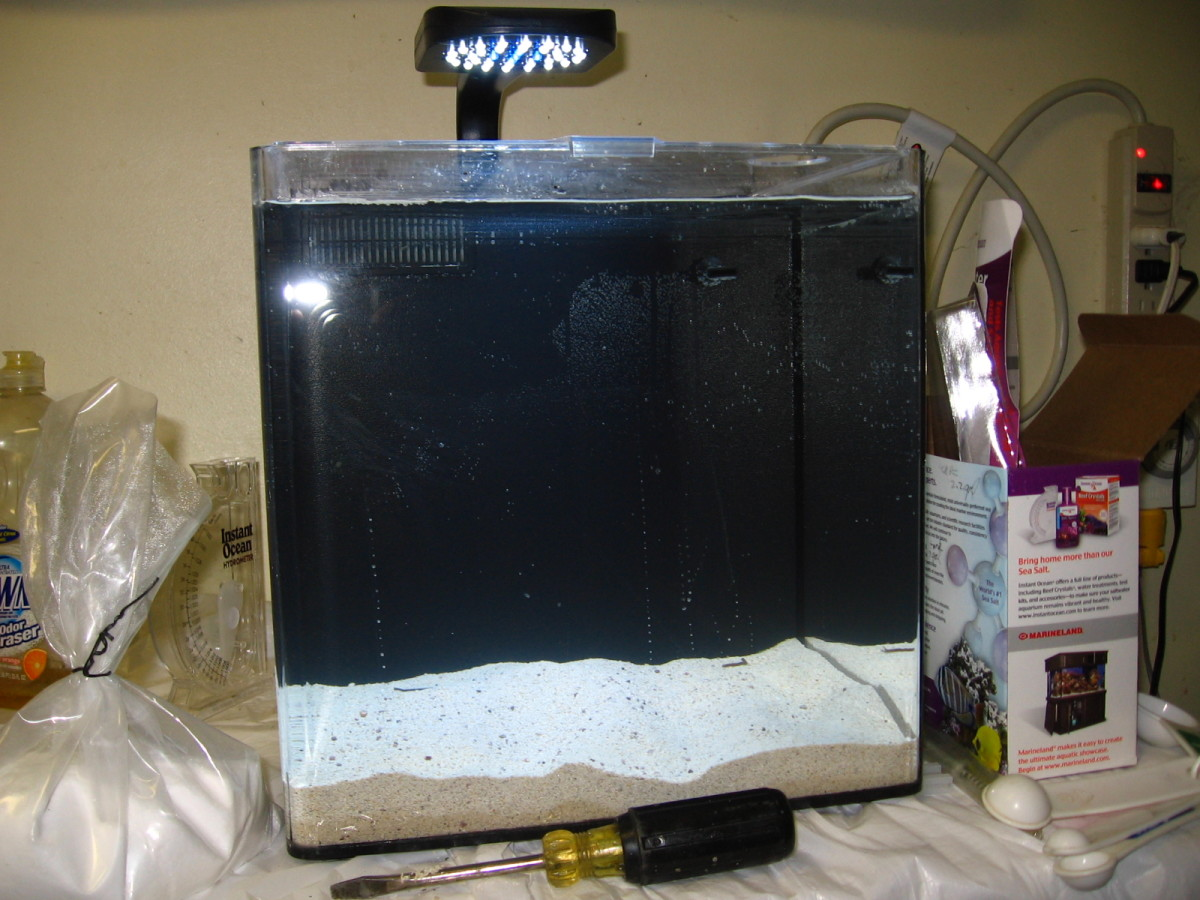 An 8 gallon nanoreef tank containing saltwater and live sand.
