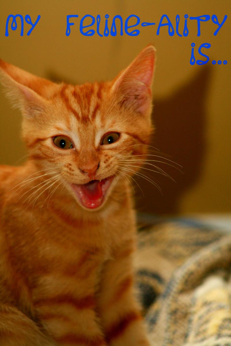 My feline-ality is clearly class clown!