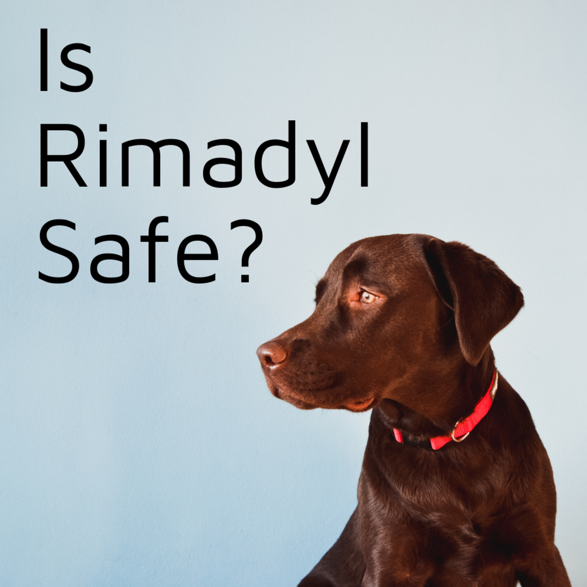 Is Rimadyl Safe for Dogs?