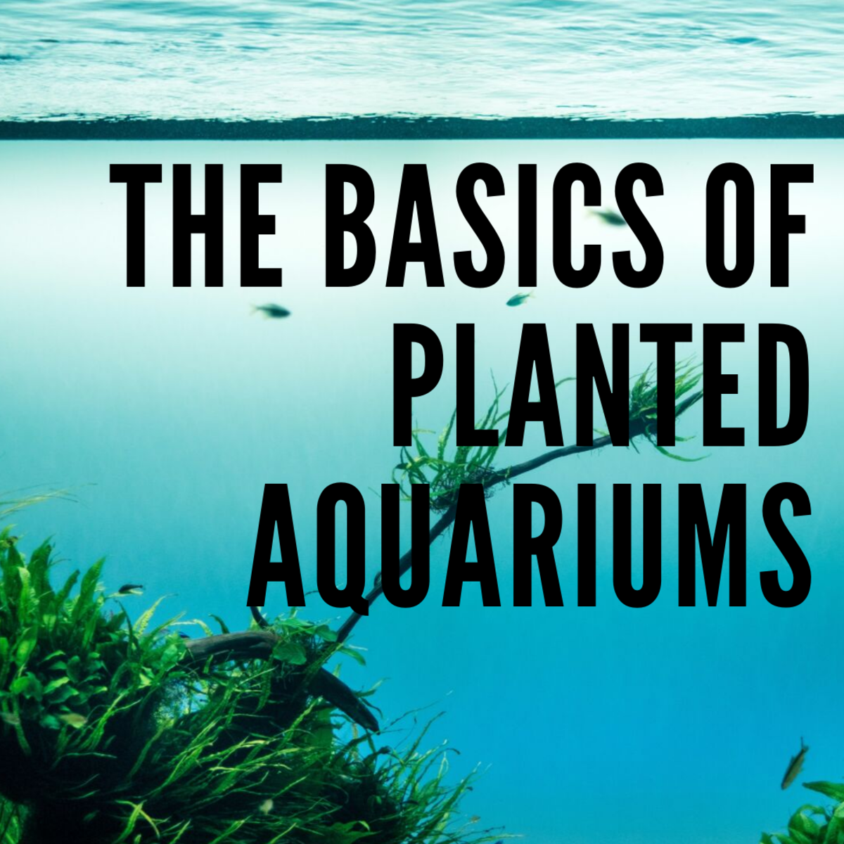 Extremely easy-to-maintain aquascapes.