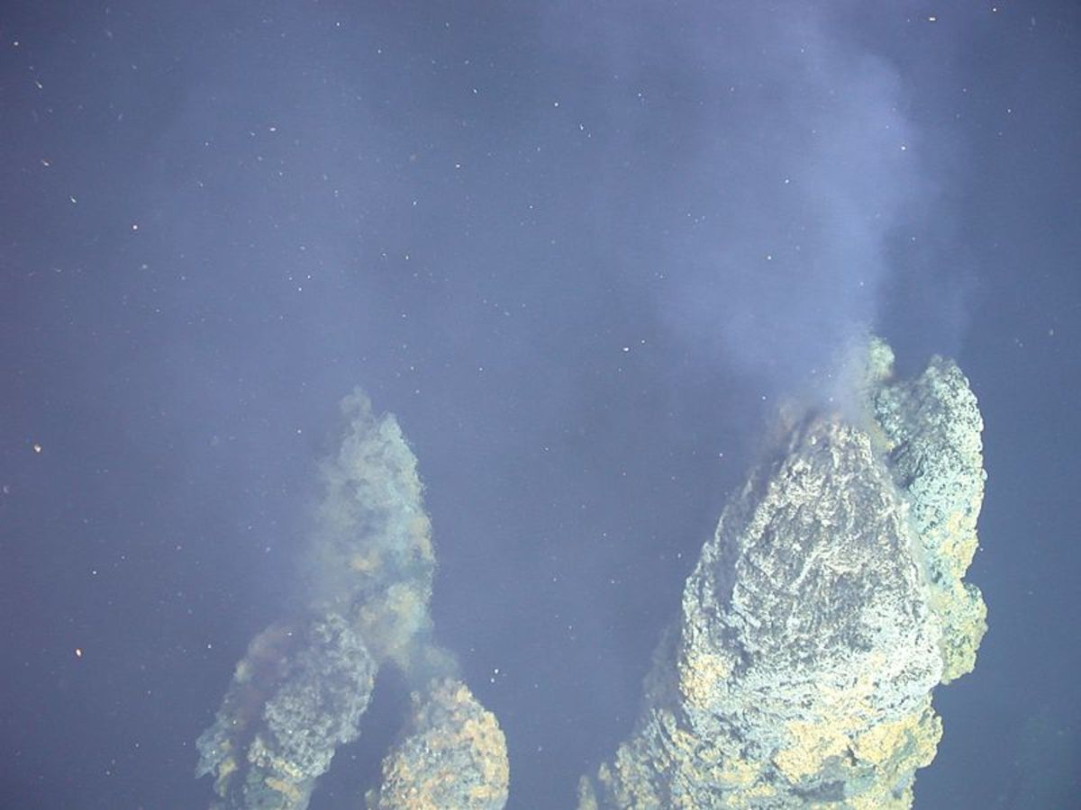 hydrothermal vent bacteria chemosynthesis Microbial chemosynthesis occurs the chemosynthetic bacteria biological rates of production in the vast community surrounding hydrothermal vents is akin.