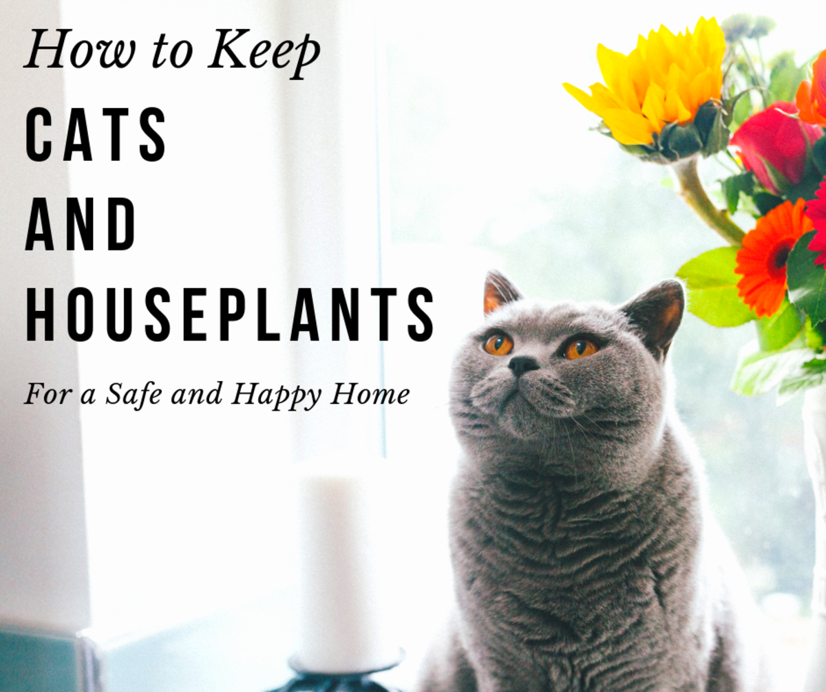 Read on to learn how your cats and houseplants can flourish under one roof.
