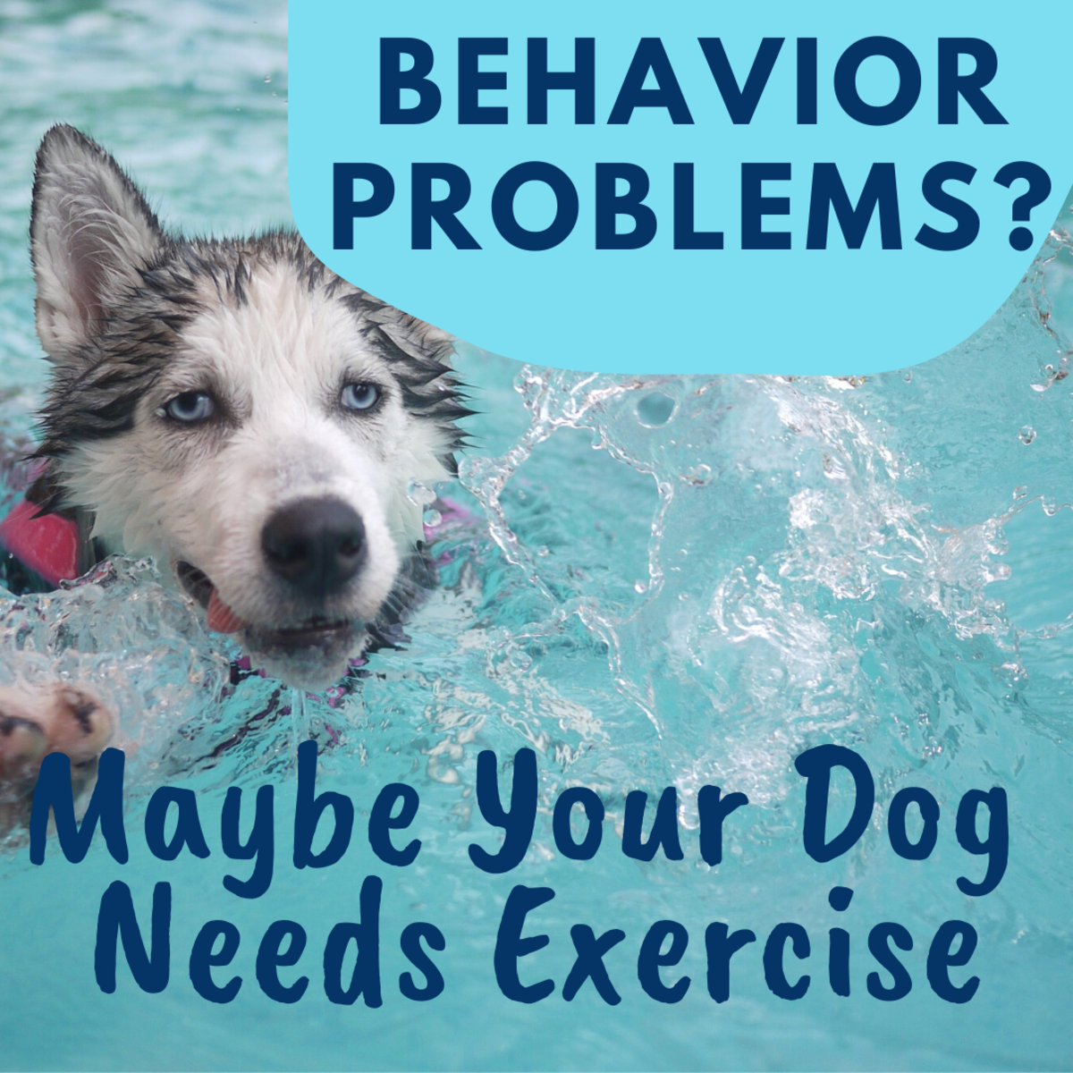 The Benefits of Exercise for Dogs With Behavioral Problems