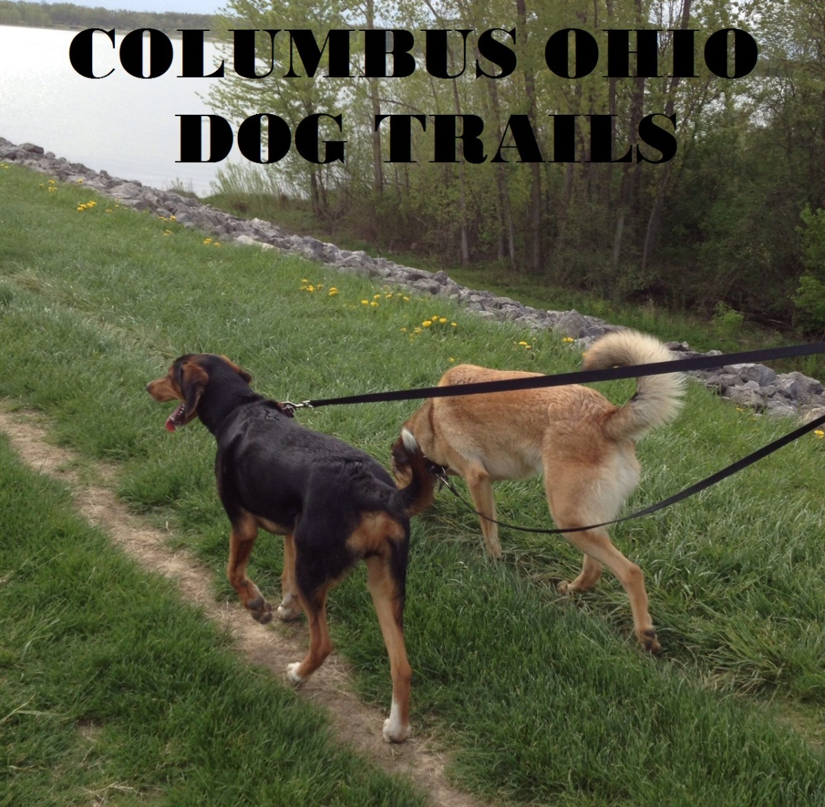 Five great dog trails near Columbus Ohio.