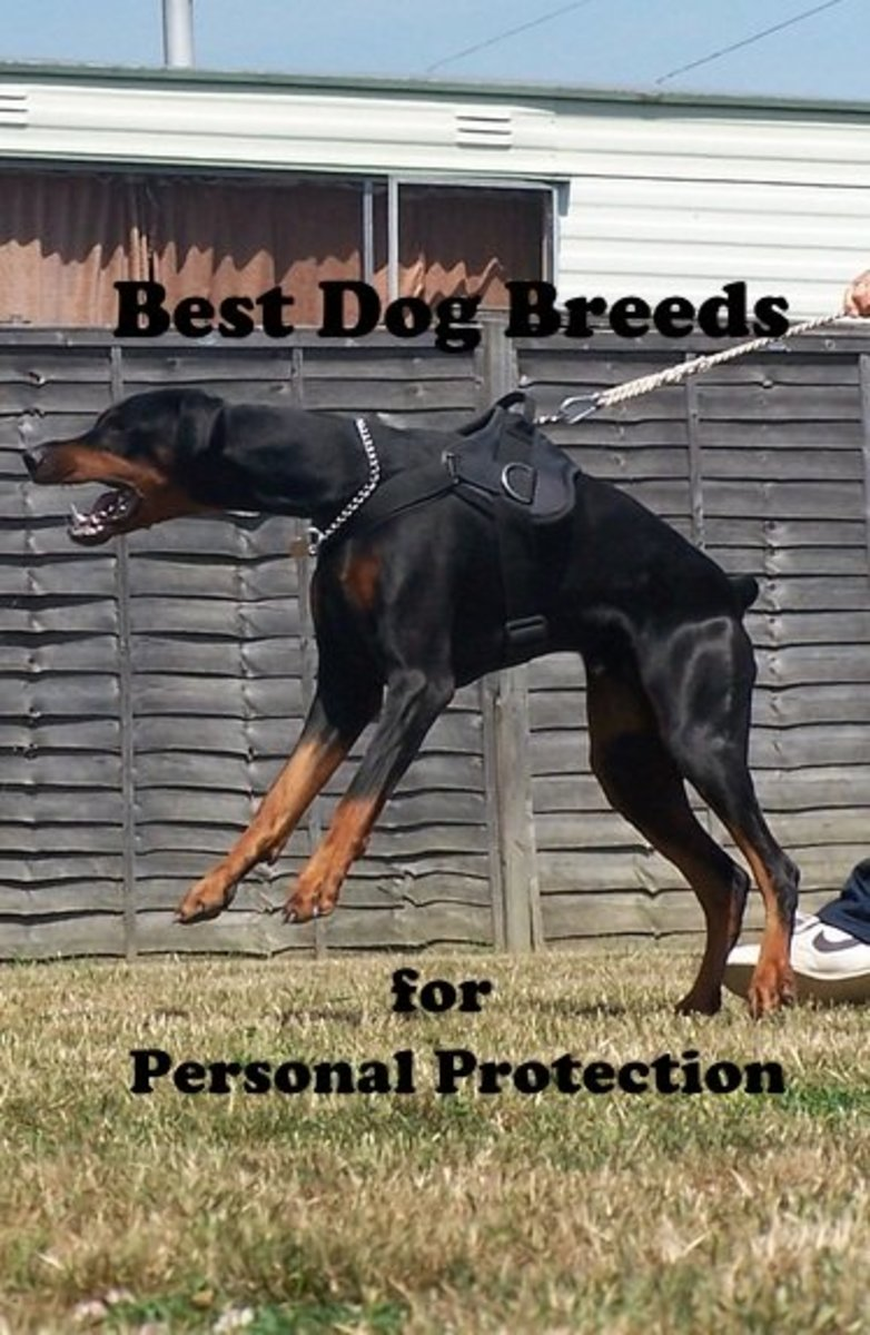 Best dog breeds for personal protection.