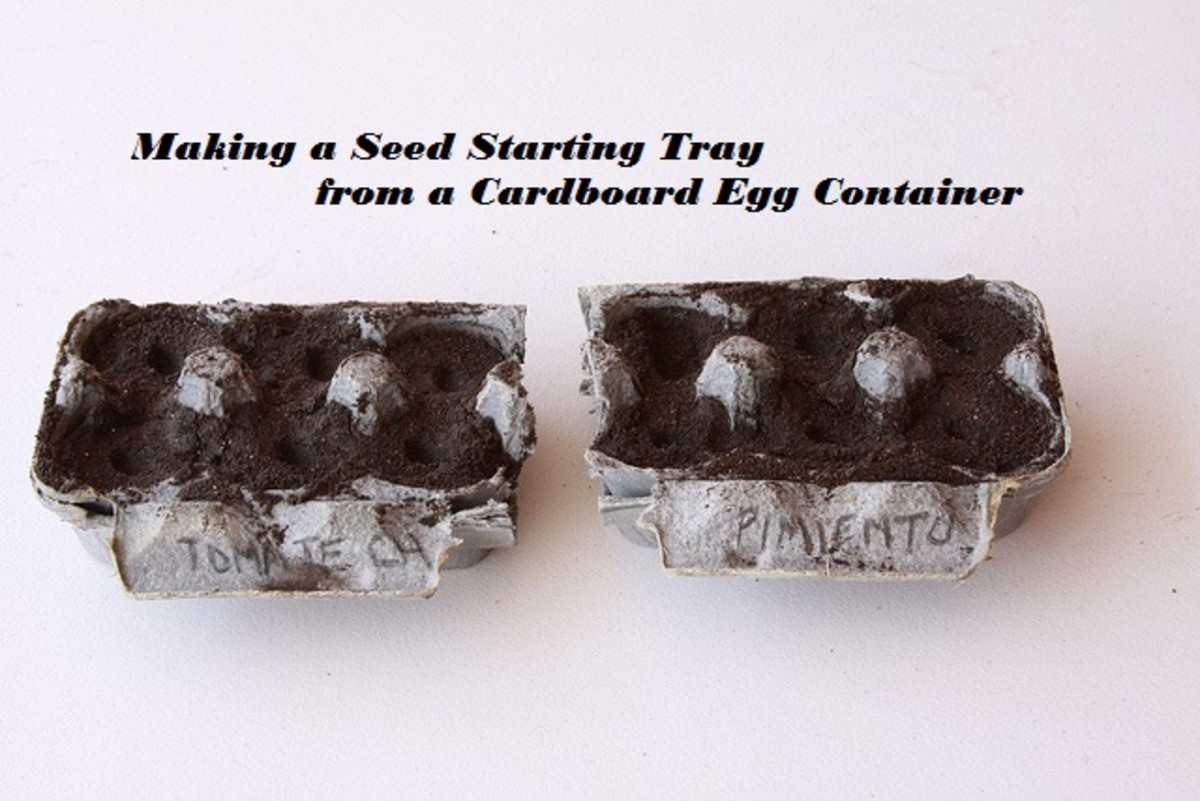 How to Use a Cardboard Egg Container to Make a Seed Starting Tray