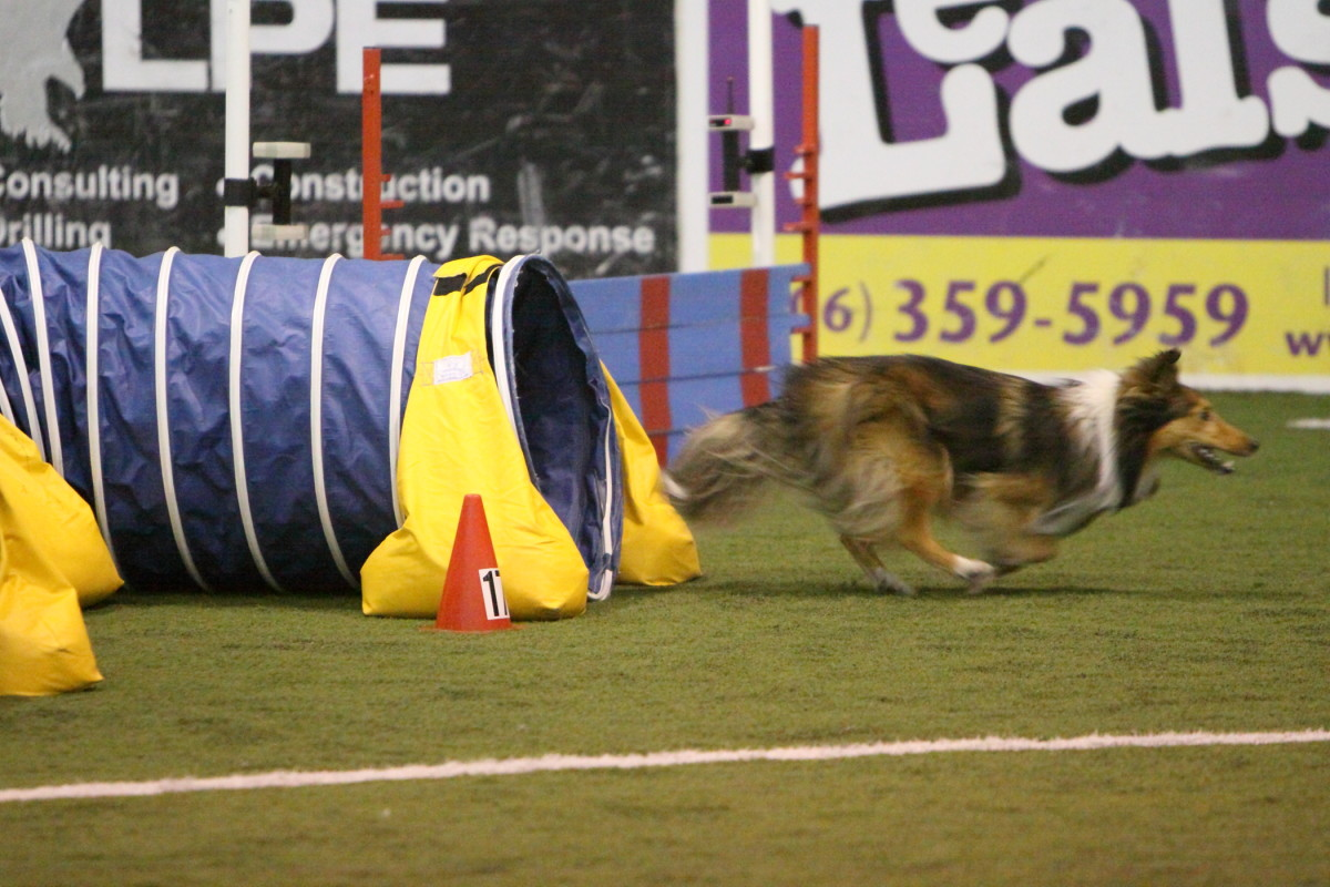 How to Focus to Increase Your Qualifying Rate at Dog Agility Trials
