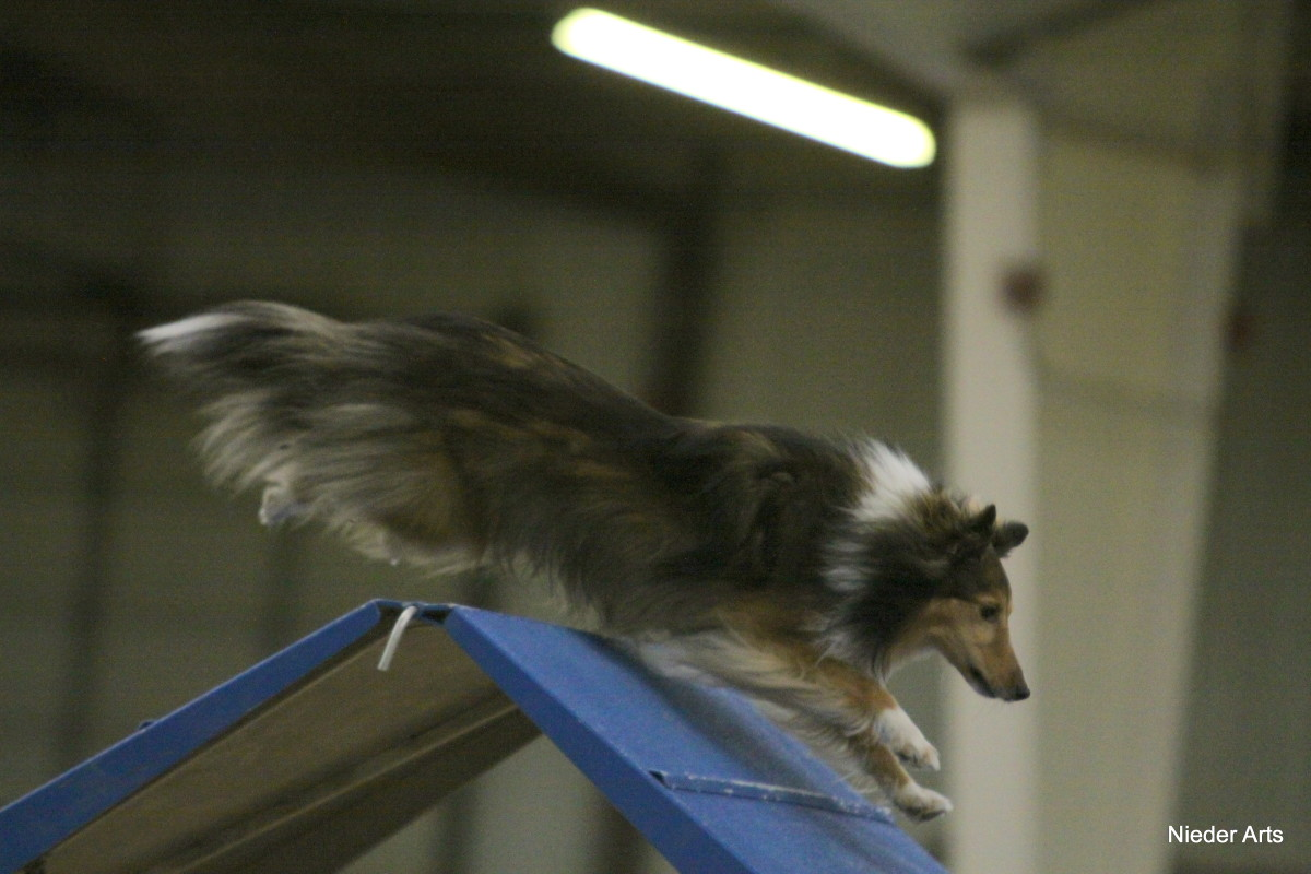 Why Science Says Listening to Music Before Dog Agility Trials Can Help You Focus