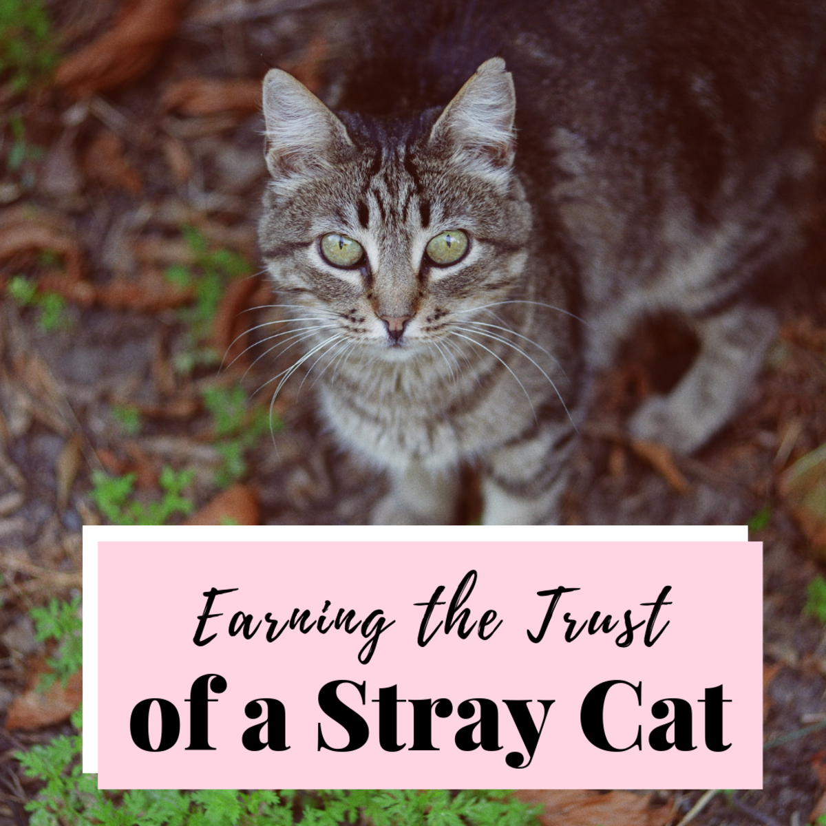 How To Win The Trust Of A Stray Cat Pethelpful By Fellow Animal Lovers And Experts