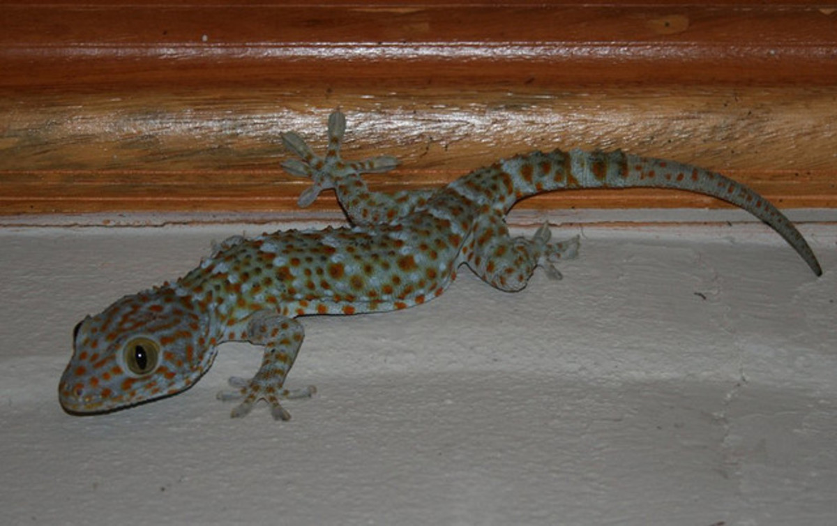 How to Rid Your Home of Lizards