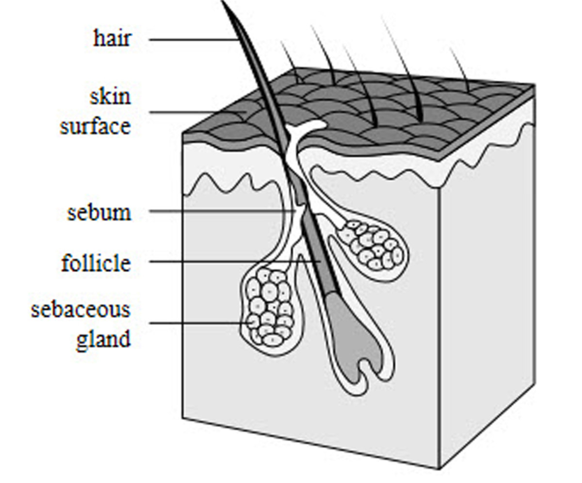 What Are Chemo Curls? Hair Regrowth After Cancer Treatment.