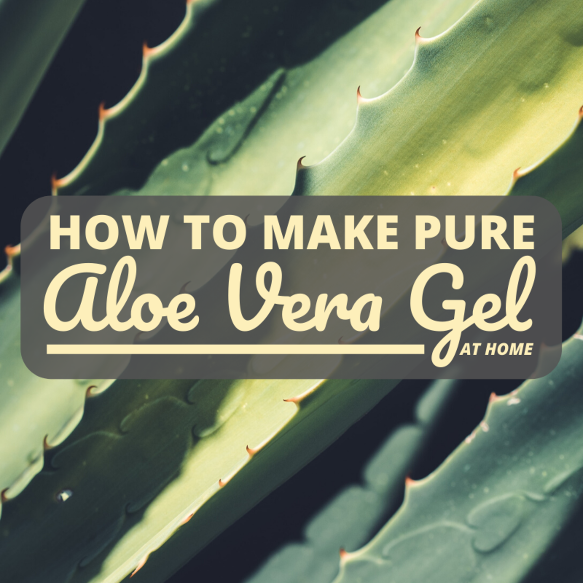 You can make healthy, hydrating Aloe vera gel in your own kitchen in just minutes.