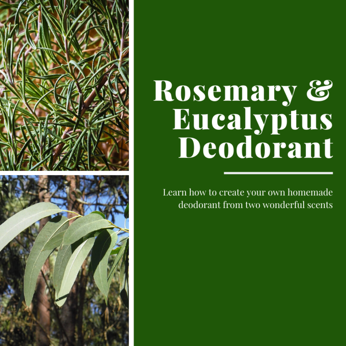 This article will show you how to craft your own homemade deodorant from rosemary and eucalyptus essential oils.