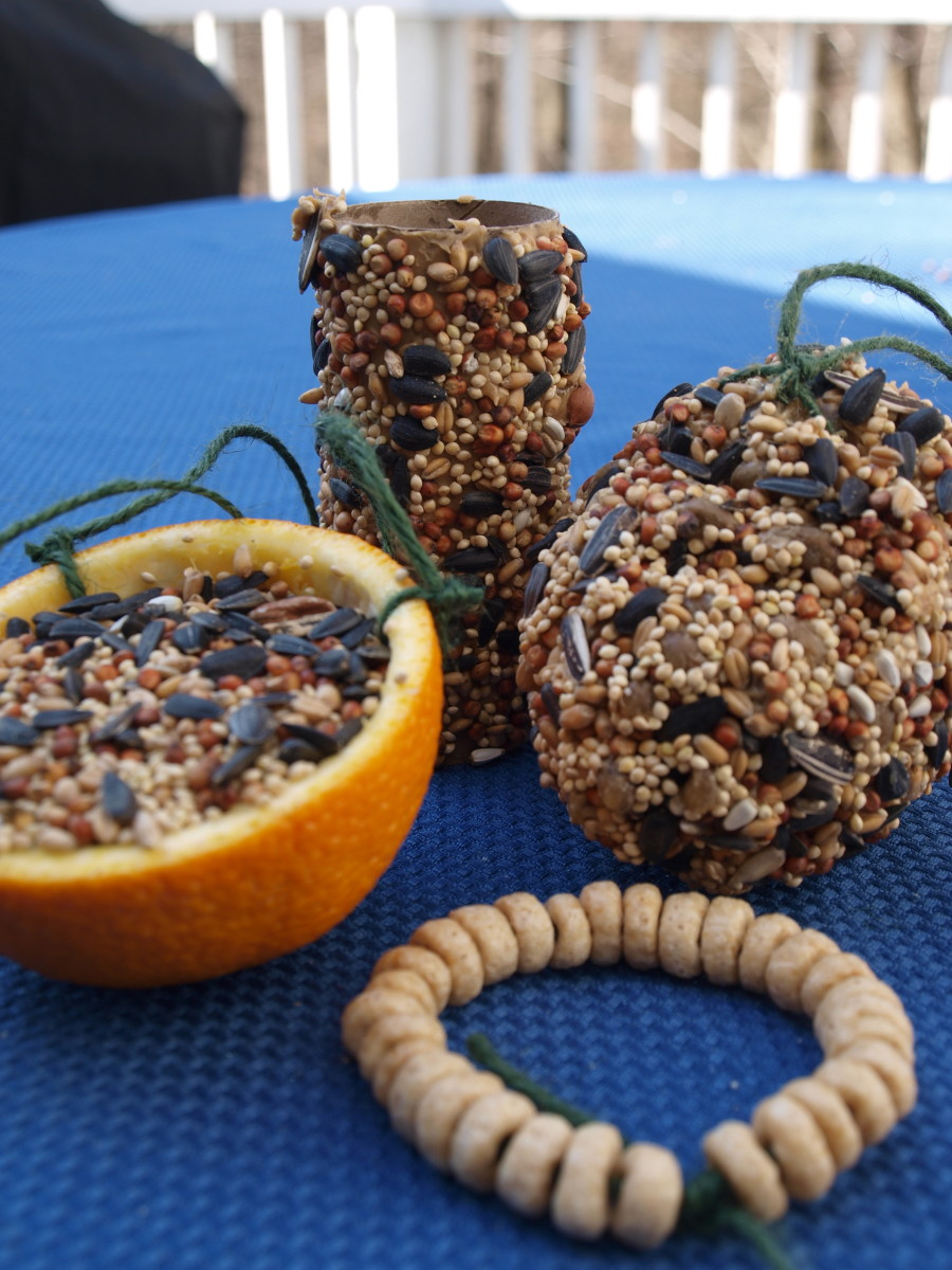 Easy Biodegradable Bird Feeder Tutorials