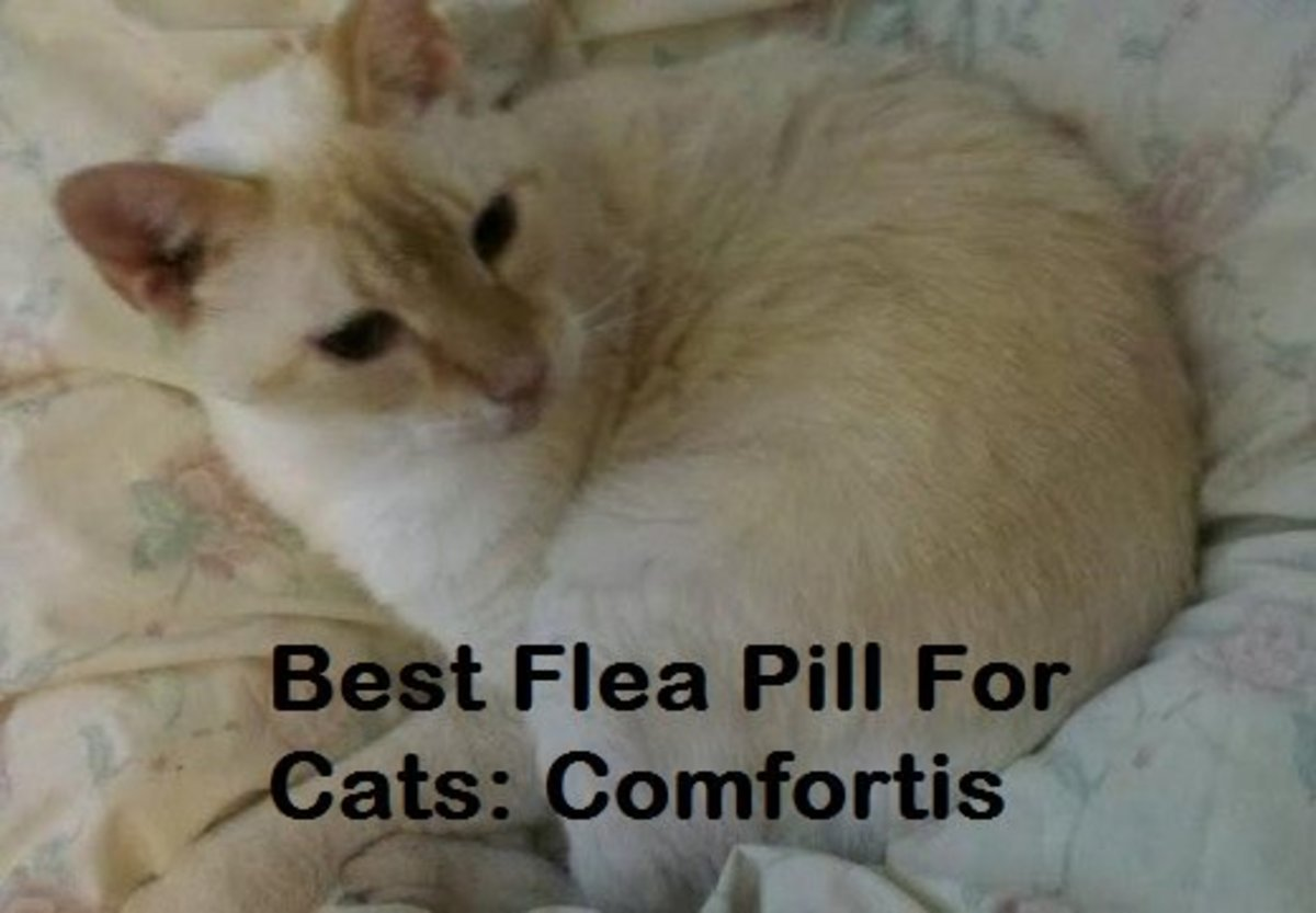How to Give a Cat Comfortis Flea Pills