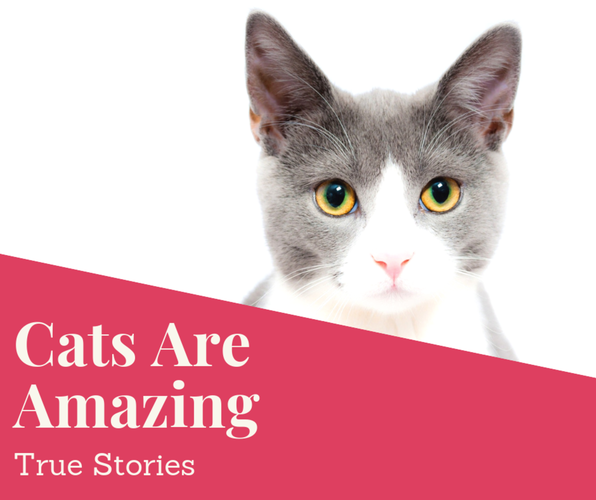 Amazing Cats and True Cat Stories