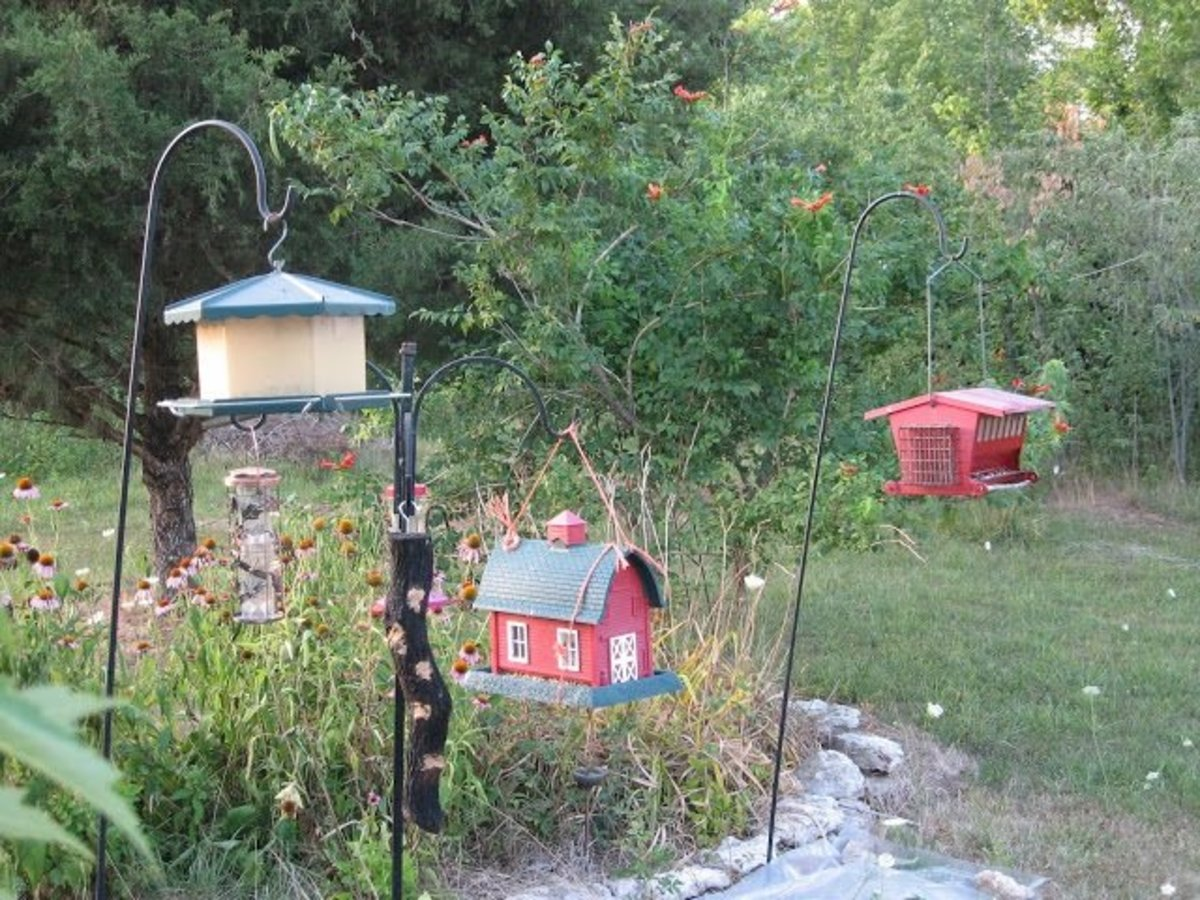 Bird Buffet and Flower Gardens.
