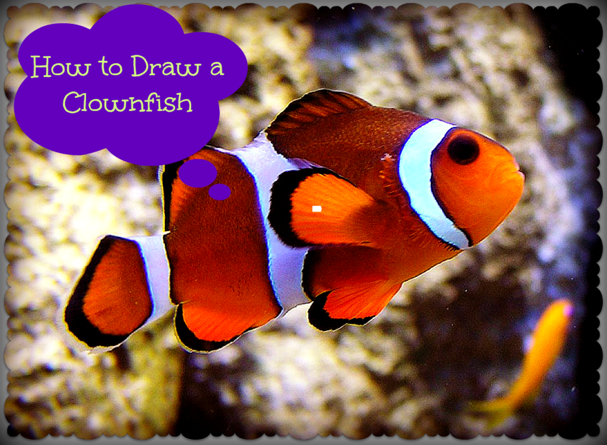 Online Art Lesson: How To Draw A Clown Fish