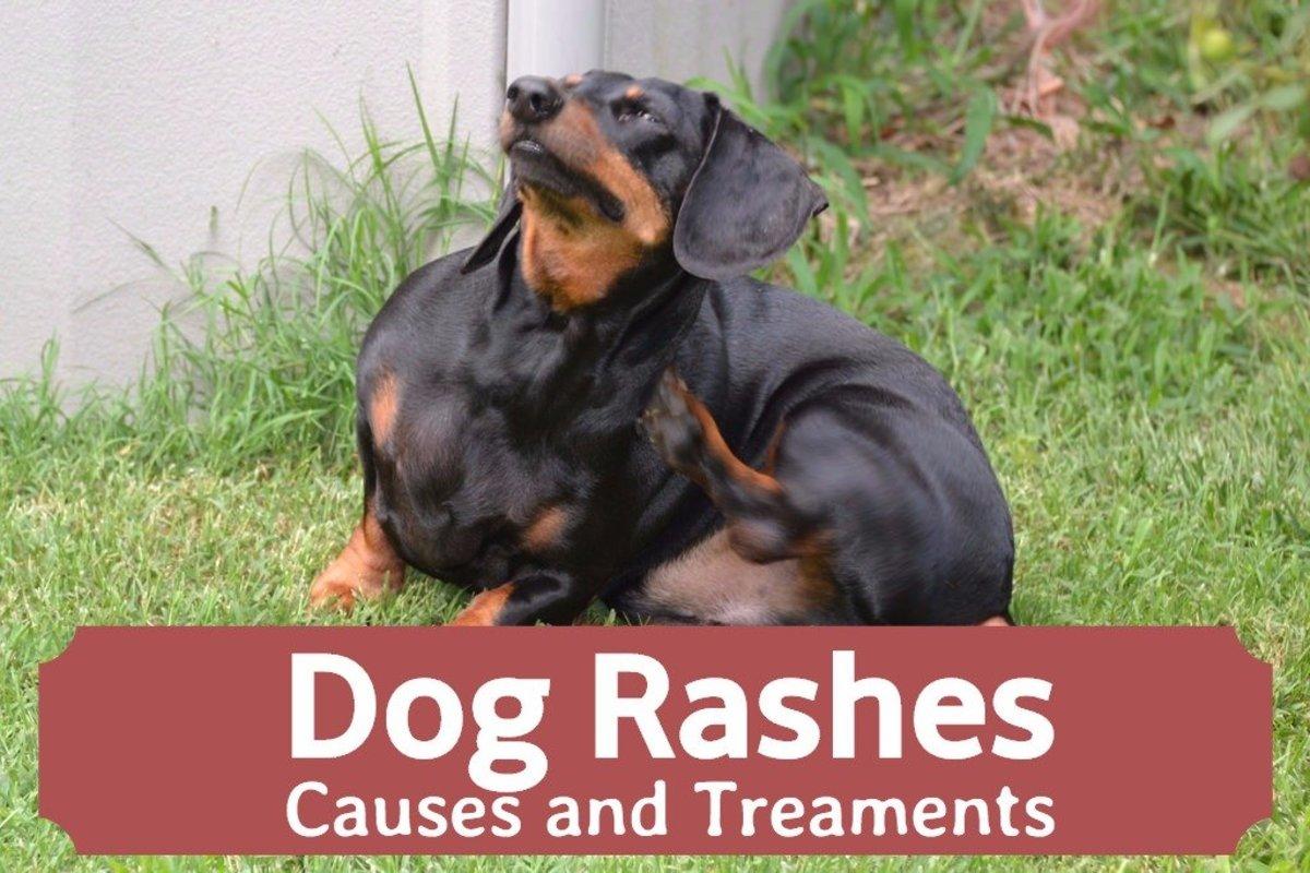 Dog Skin Rashes Symptoms Causes And