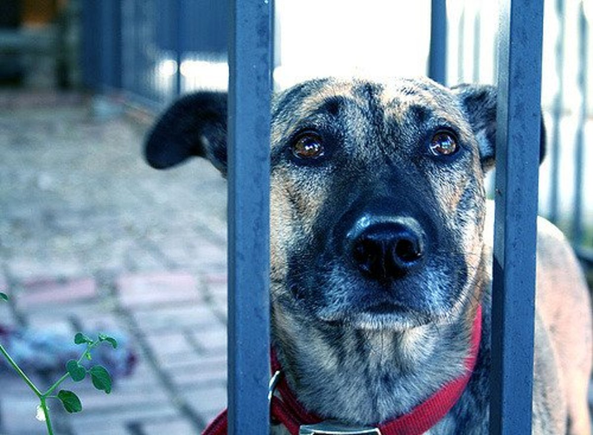 7 Things You Should Do When You Leave a Dog Home Alone