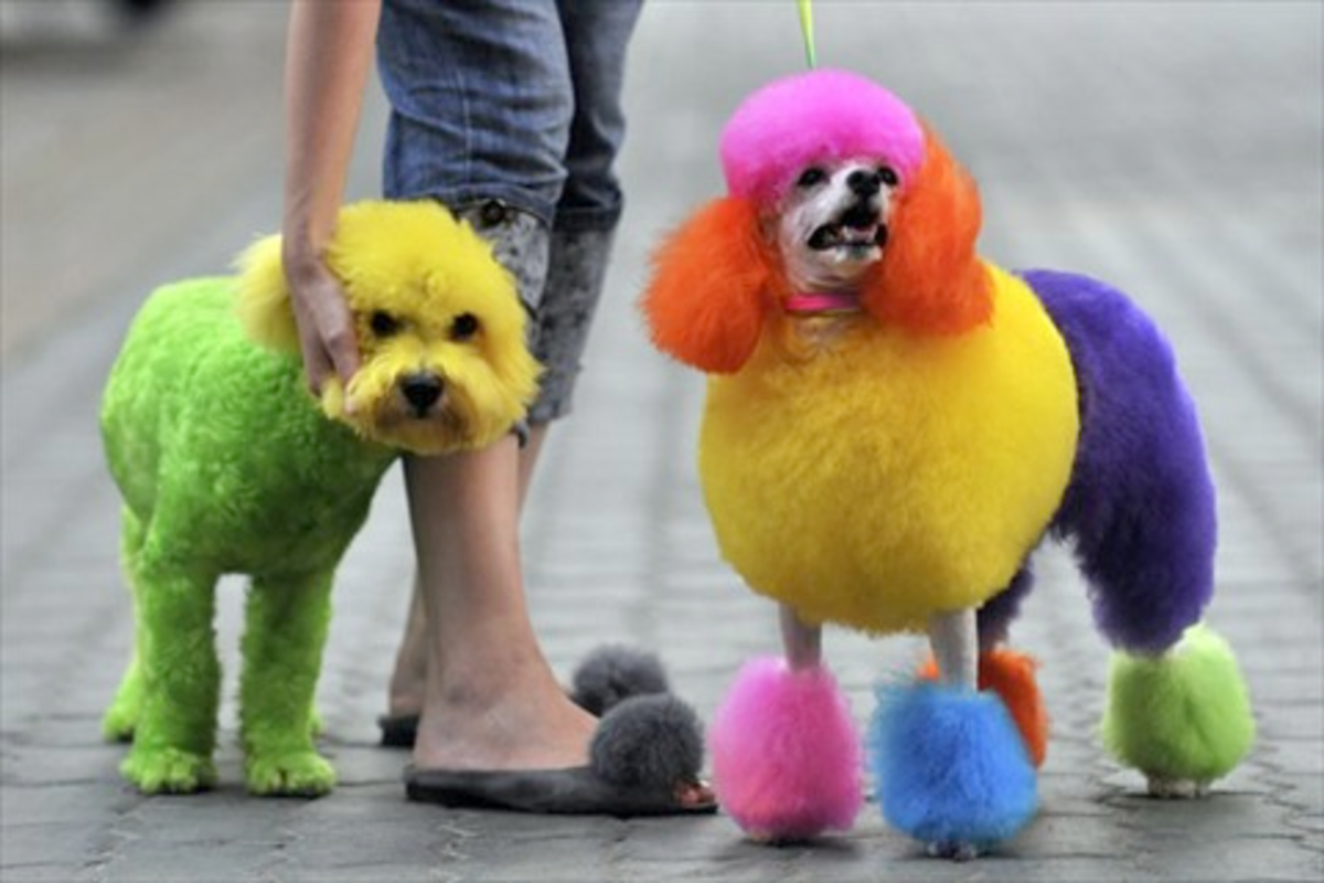 Who could resist a colorful pooch like this?