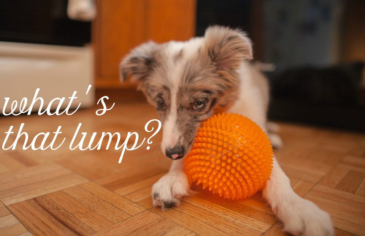 Causes of Lumps on Dog Paw Pads