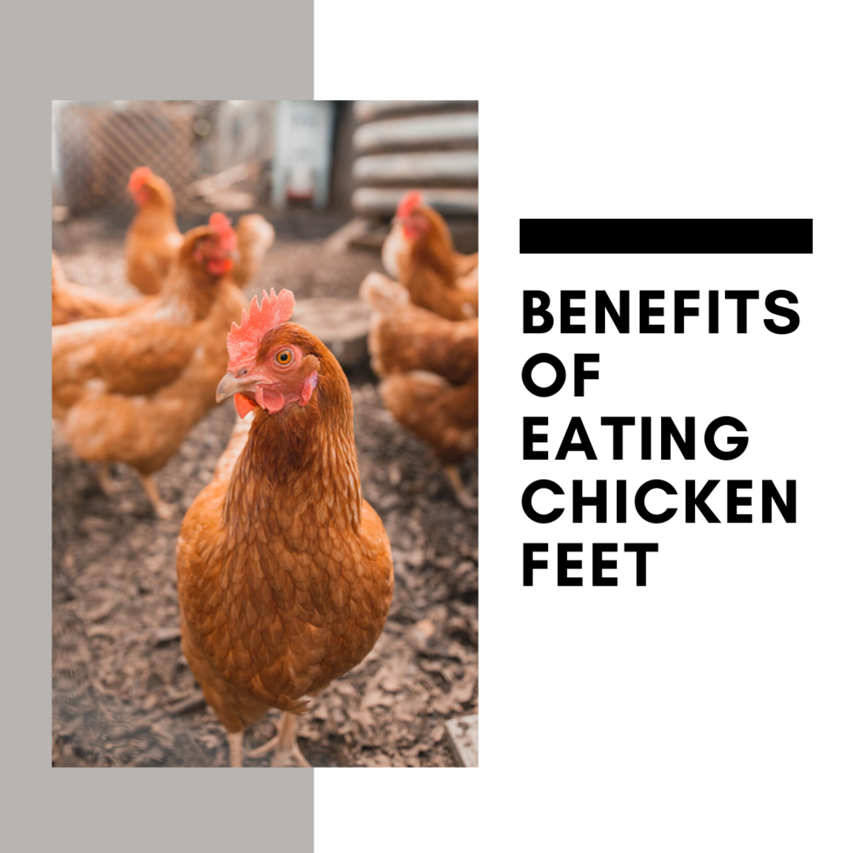 Chicken feet provide a surprising amount of health benefits. Read on to learn more.