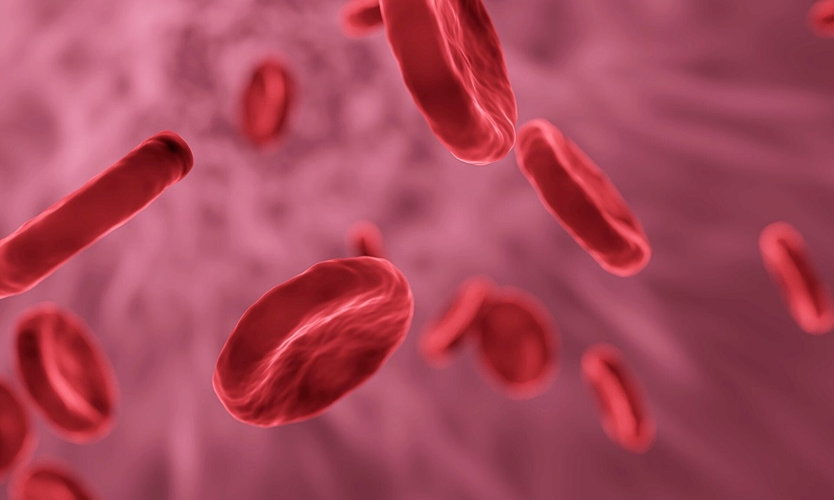 Red blood cells are thinner in the middle than at the edge.