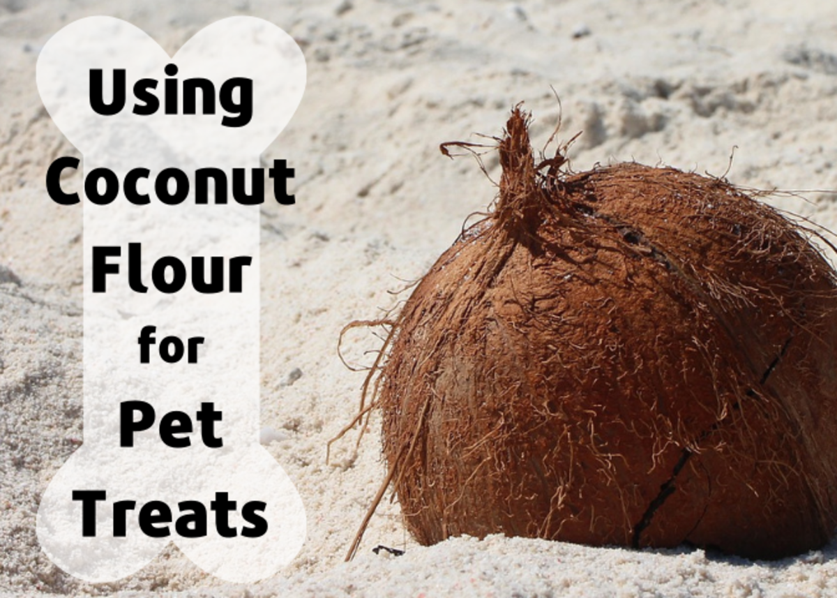 Coconut flour can be a nutritious alternative to wheat or corn in pet treats.