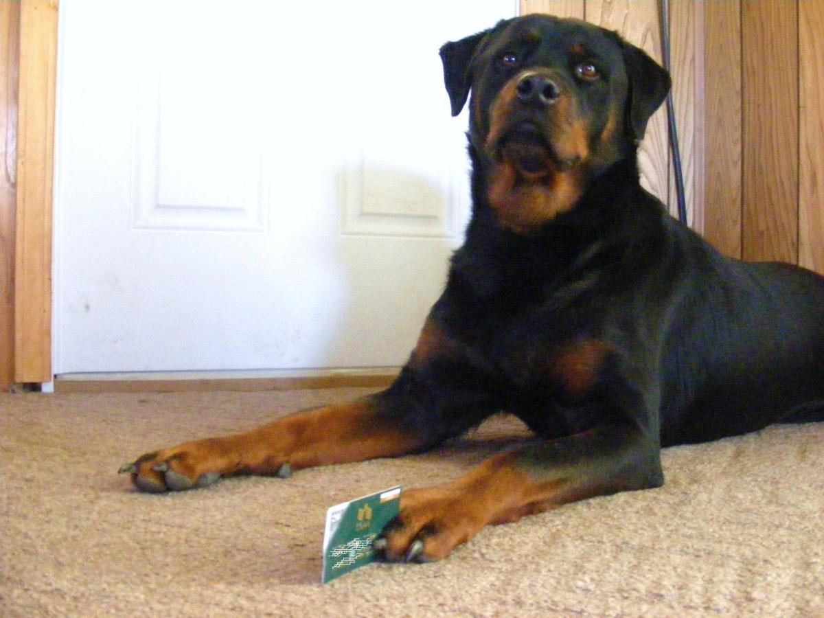 The Four Quadrants of Dog Training