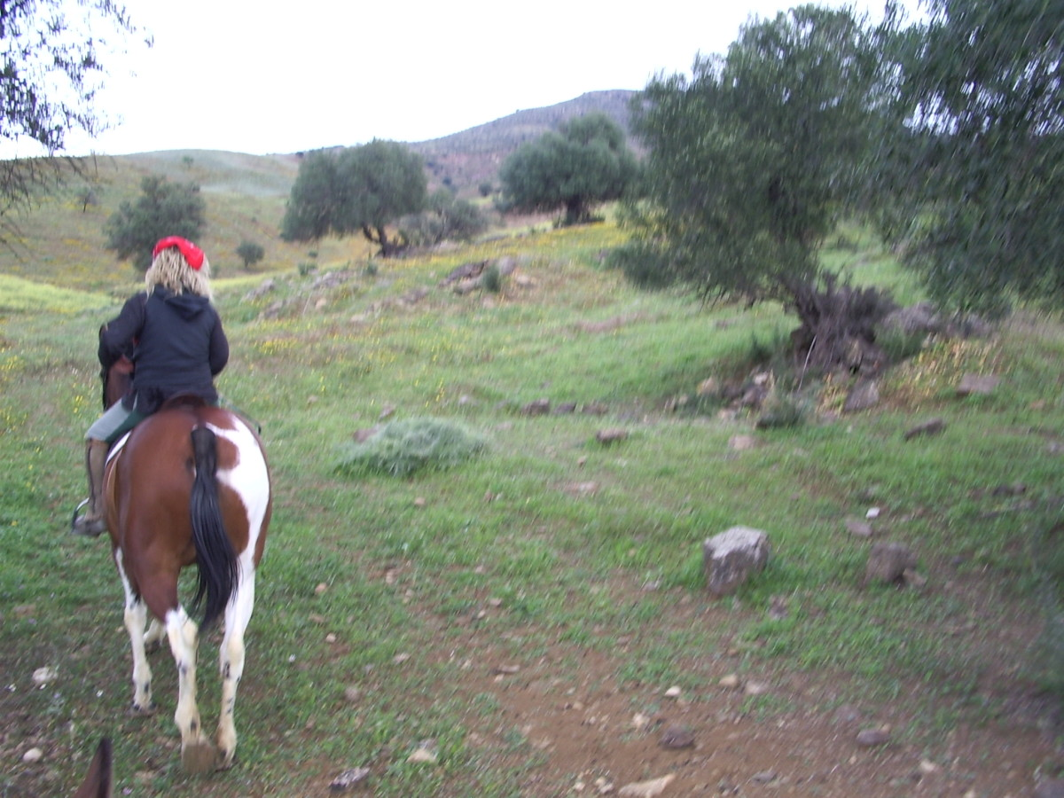 How to Select and Purchase a Trail Horse