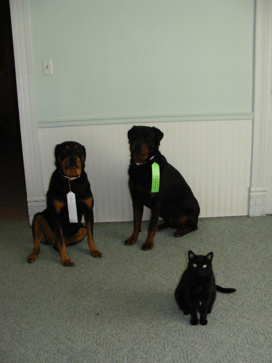 Differential Reinforcement Schedules in Dog Training