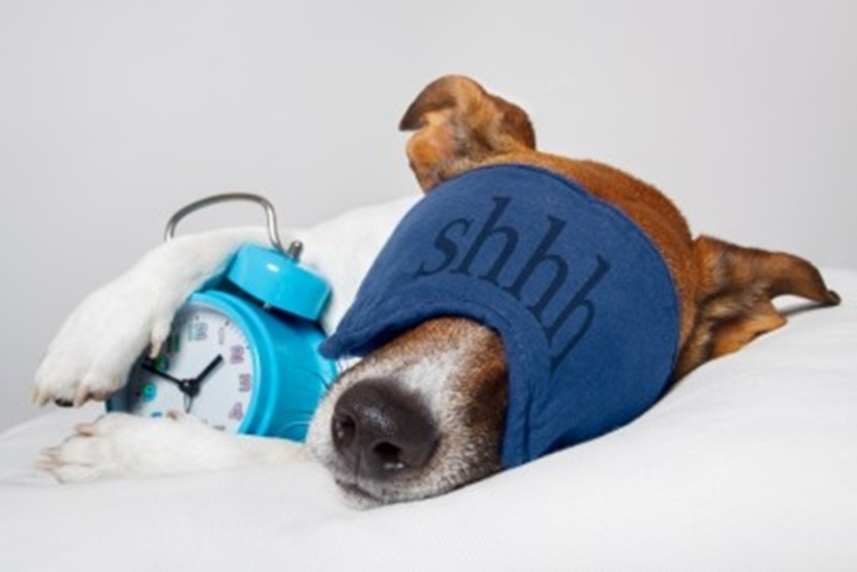 Make sure your dog has sweet dreams by choosing the perfect dog bed!