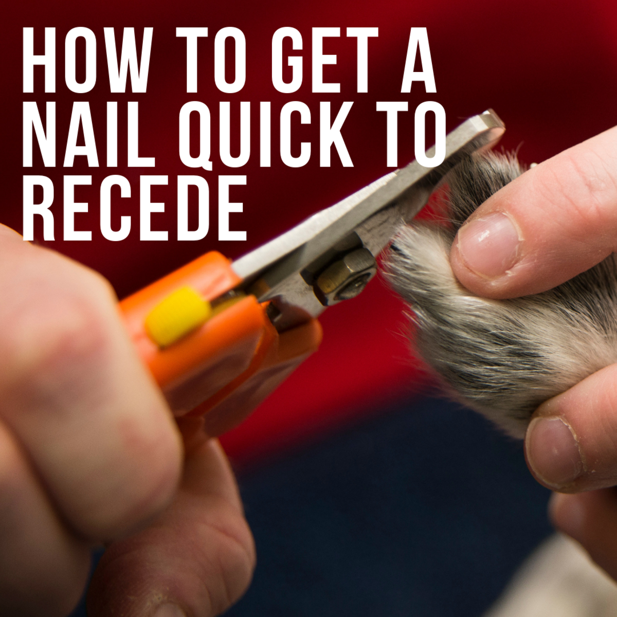 How to Make a Dog's Nail Quick Recede
