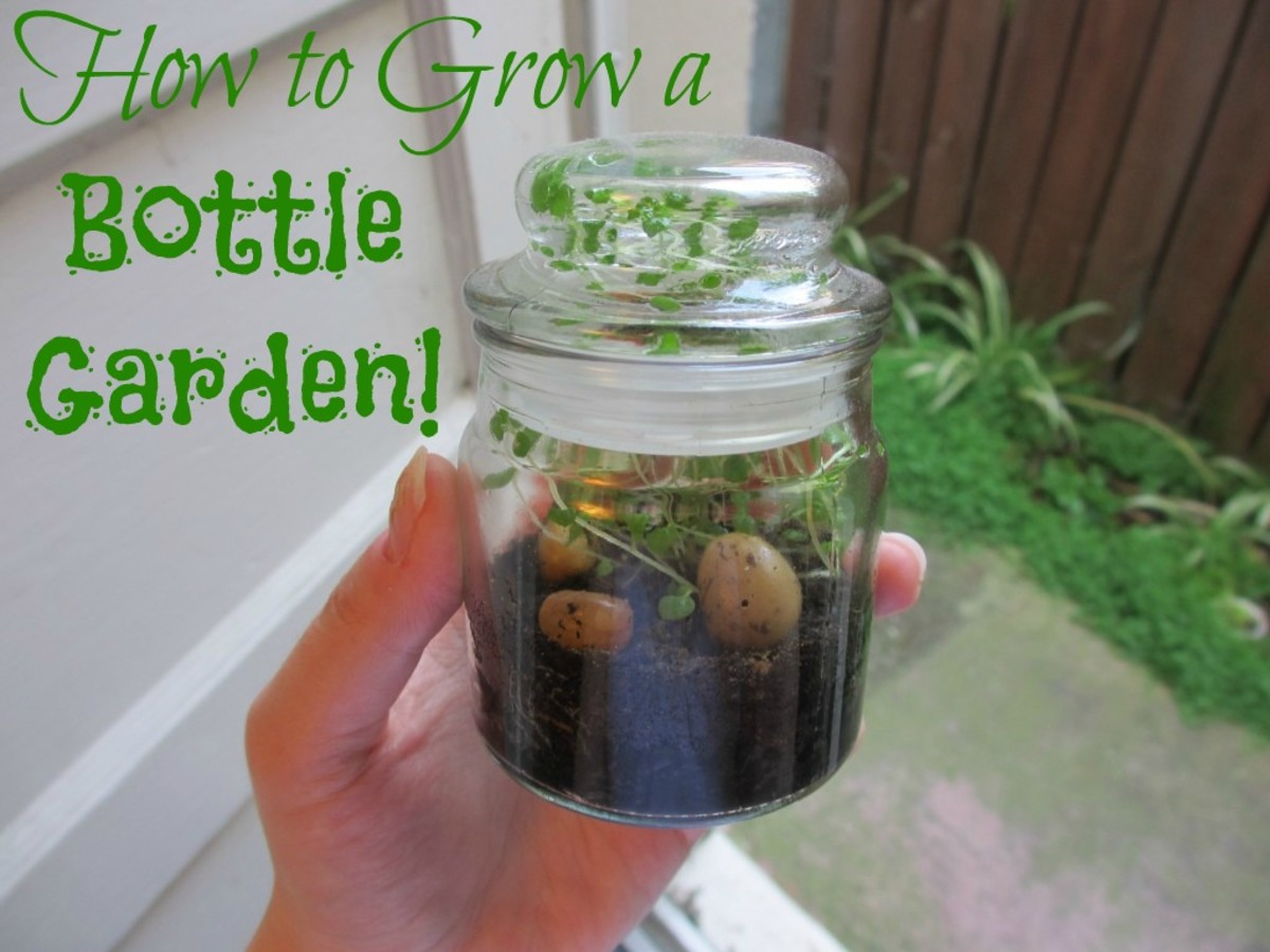 How to Grow a Bottle Garden