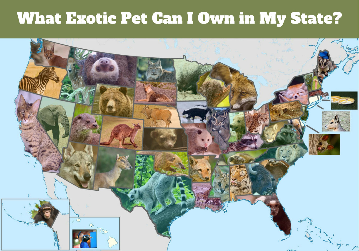 This Exotic Pet Is Legal in Your State